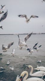 Seagull Sea Beach Port Nature Animal