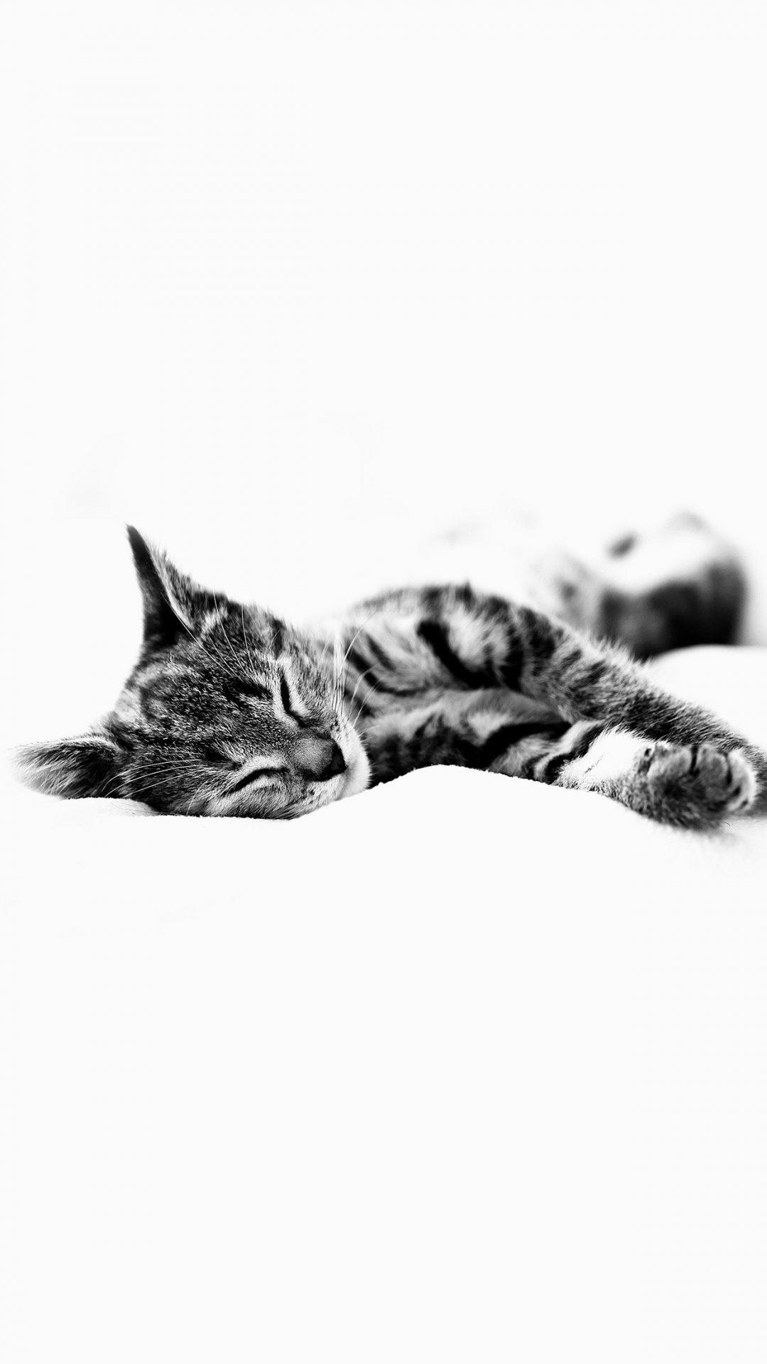 Sleepy Cat Kitten White Animal