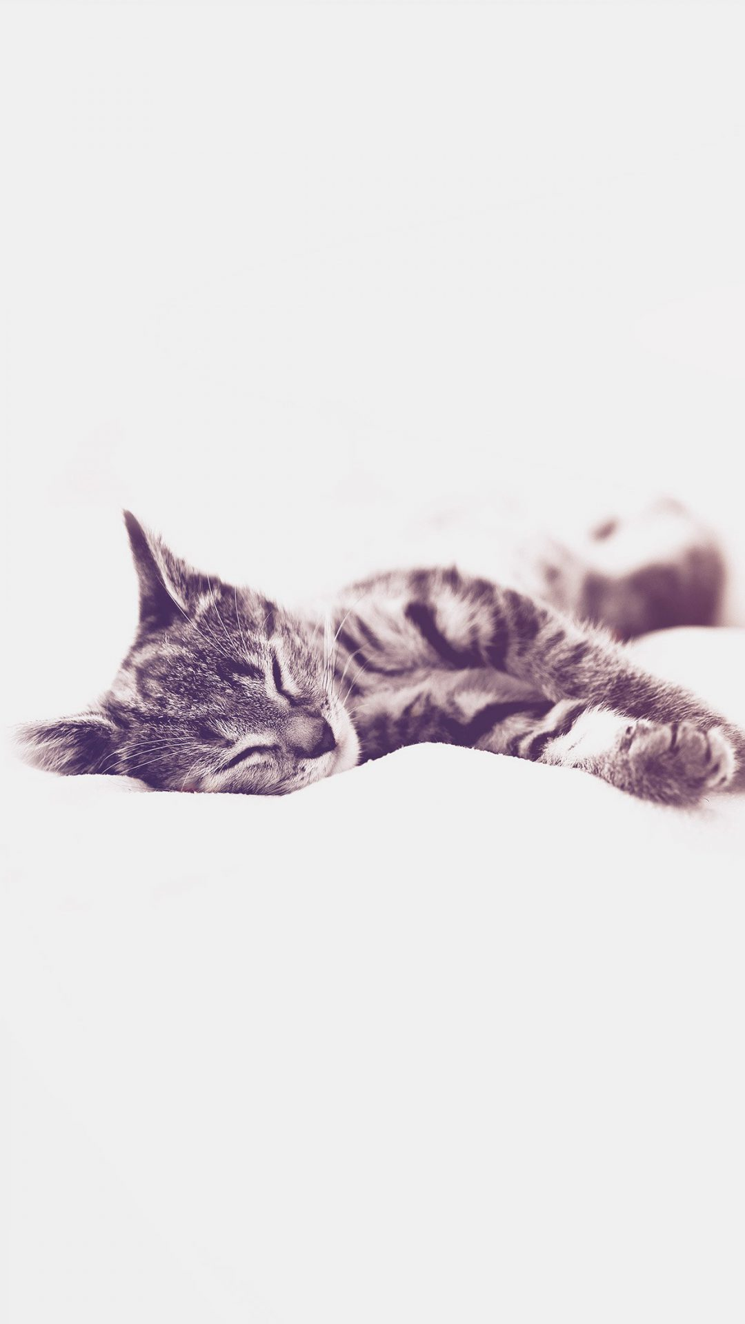 Sleepy Cat Kitten White Animal Blue
