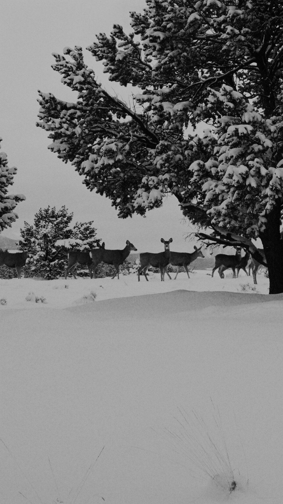 Snow Deer Winter Nature Animals
