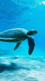 Turtle Sea Ocean Animal