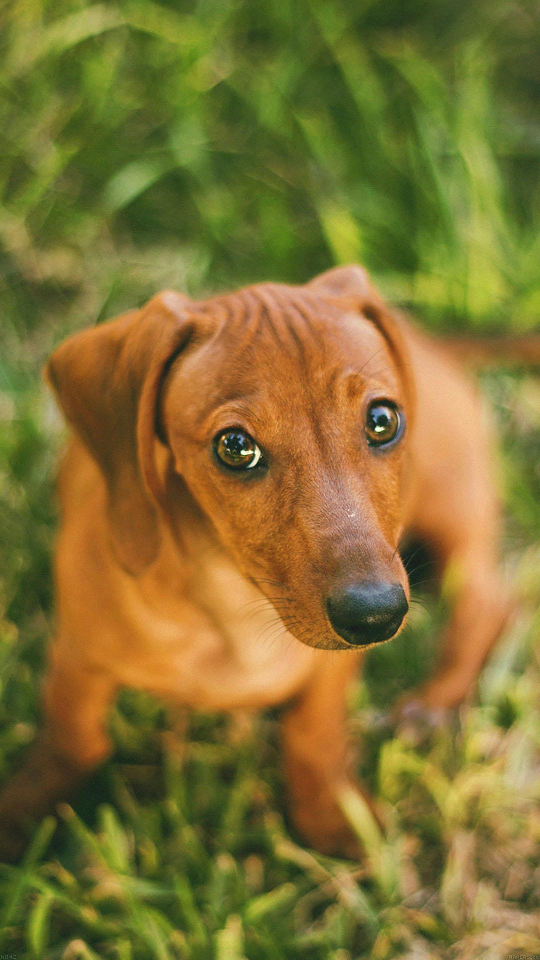 Wallpaper Dog Looking Up Animal