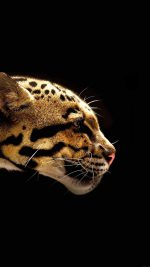 Wallpaper Wild Cat B Animal