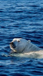 Watch Me Swim Polar Bear Sea Animal