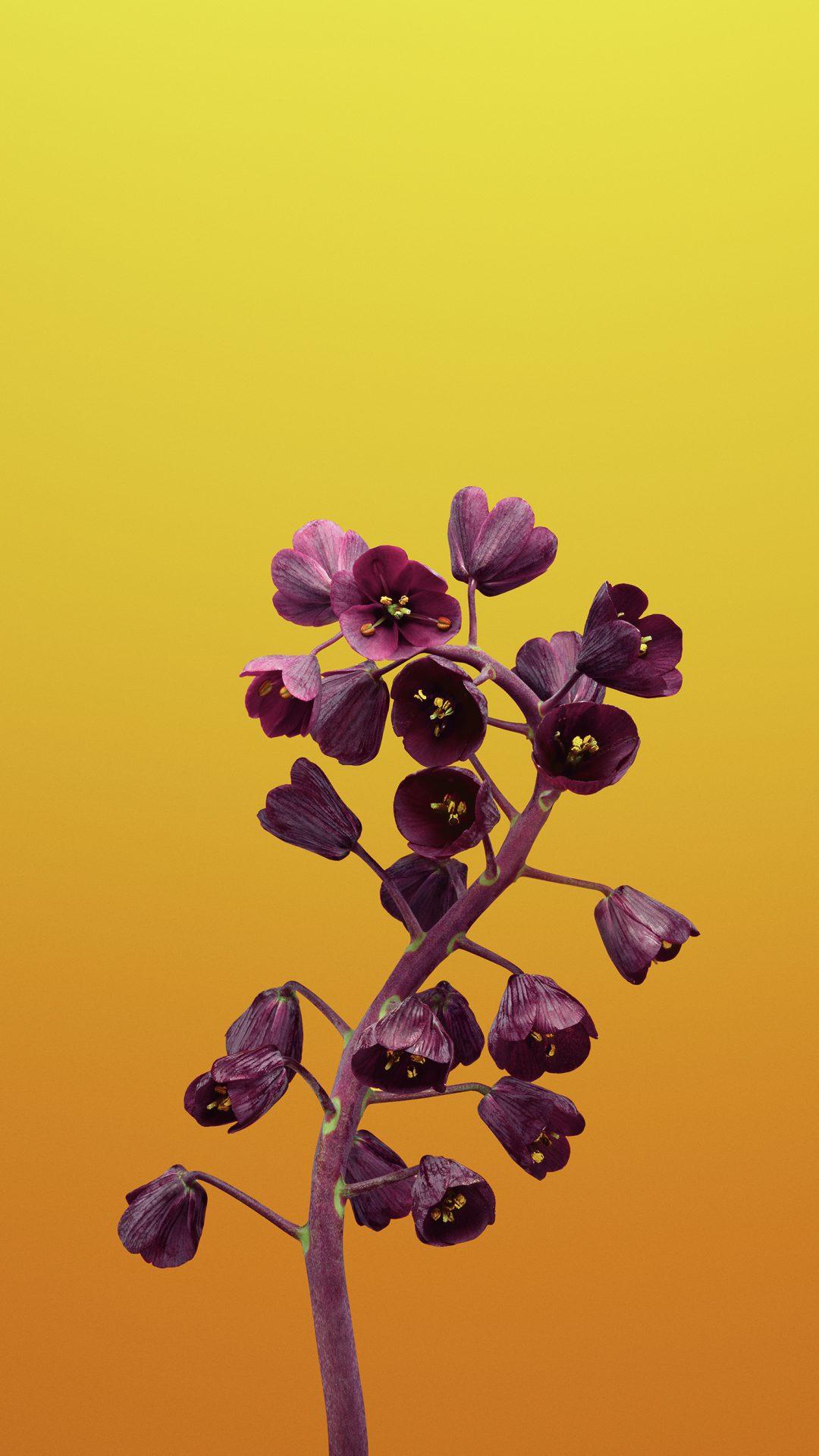 Flower FRITILLARIA
